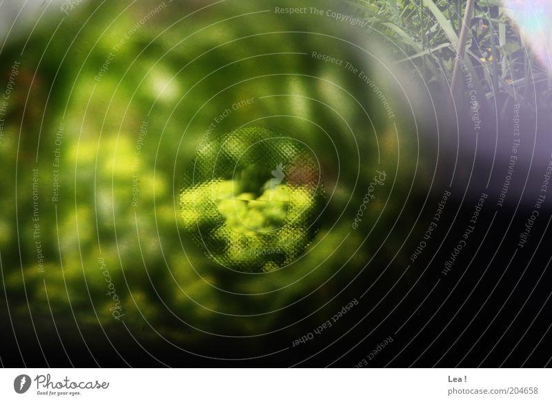 Nature Plant Colour Fresh Camera Analog Vista Viewfinder