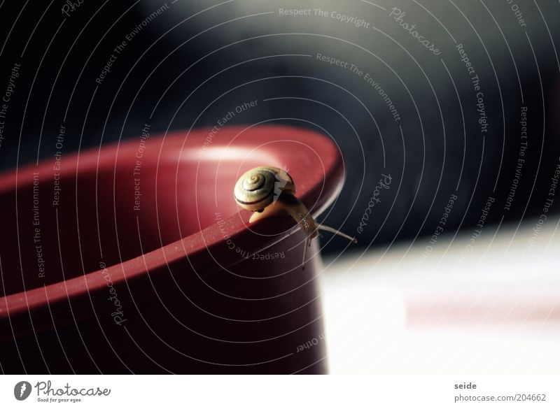 so tiny Animal Snail Animal face 1 Vase Crawl Small Beautiful Red Black Authentic Loneliness Calm Discover Colour Uniqueness Life Time Colour photo