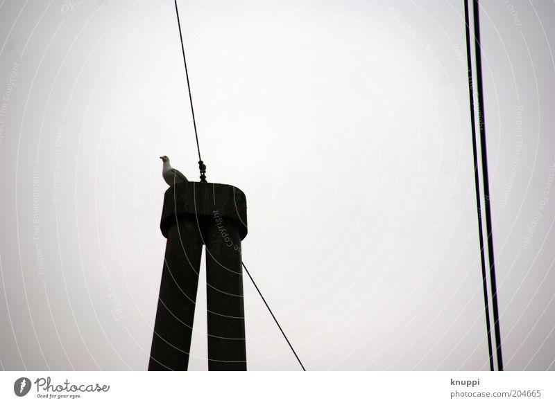 have a break... Telecommunications Nature Animal Air Sky Cloudless sky Bad weather Wild animal Bird Pigeon 1 Telegraph pole Metal Line Wait Gray Black White