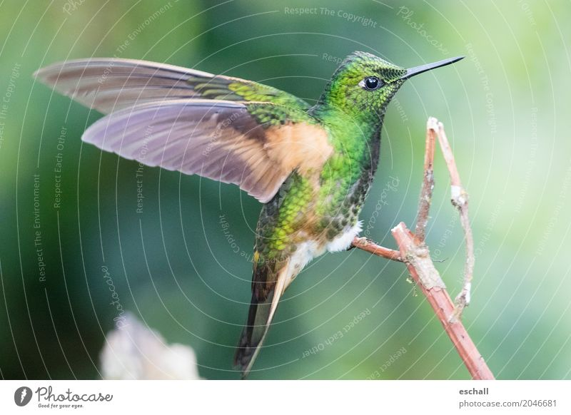 Nature Beautiful Green Animal Natural Exceptional Bird Flying Free Elegant Esthetic Wild animal Fantastic Speed Exotic Virgin forest