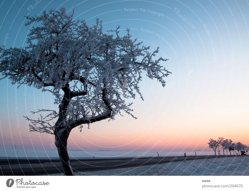 Sky Nature Beautiful Tree Loneliness Winter Landscape Environment Street Cold Snow Lanes & trails Horizon Ice Climate Fog