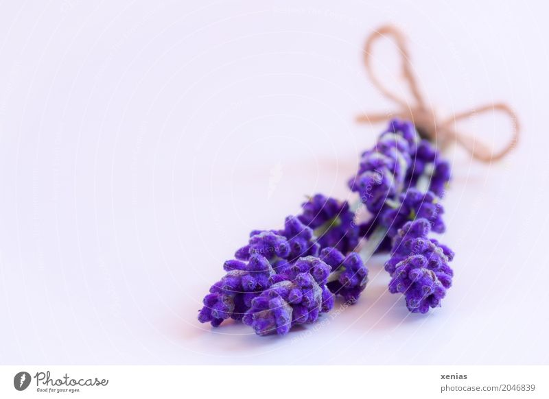 Summer White Blossom Autumn String Herbs and spices Wellness Violet Bouquet Fragrance Lavender Bow Labiate