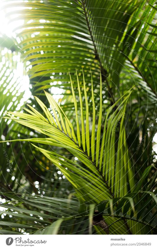 Graphics and Textures - Tropical feeling Nature Plant Summer Colour Relaxation Leaf Life Lifestyle Healthy Style Fashion Swimming & Bathing Design Dream Elegant