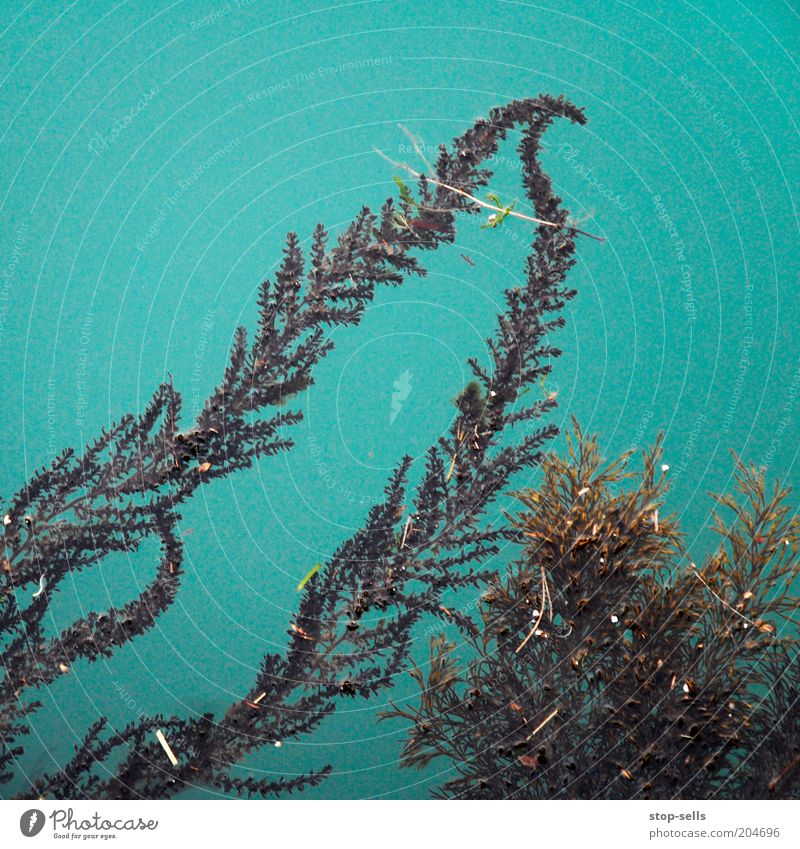 Nature Water Green Turquoise Pond Fern Foliage plant Plant Surface of water Aquatic plant Underwater plant