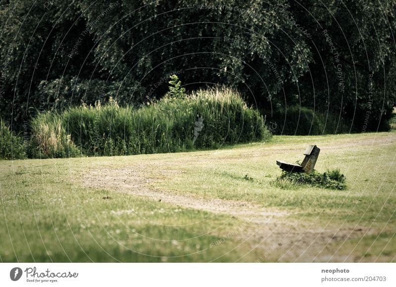 Nature Tree Green Calm Meadow Grass Garden Lanes & trails Park Lawn Bench Romance Bushes Harmonious Park bench