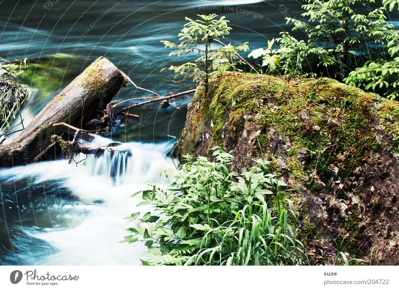 Nature Water Beautiful Plant Landscape Environment Rock Natural Growth Authentic Wet Bushes River Tree trunk River bank Brook