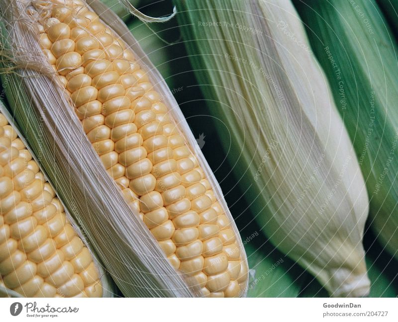 Analog maize Food Vegetable Maize Nutrition Authentic Fresh Near Colour photo Interior shot Deserted Shallow depth of field Corn cob
