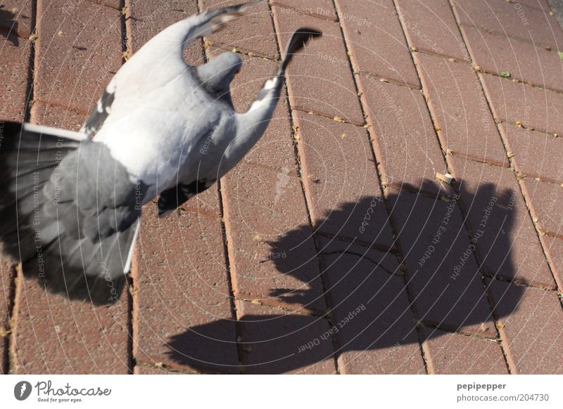 dovecote Animal Bird Pigeon 1 Stone Gray Pink Silver Colour photo Multicoloured Exterior shot Day Shadow Contrast Bird's-eye view Flying Stone floor