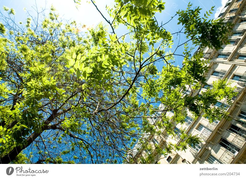 Sky Tree Sun Summer Leaf House (Residential Structure) Window Spring Facade Branch Twig Dazzle Branchage Town house (City: Block of flats) Brilliant Nature