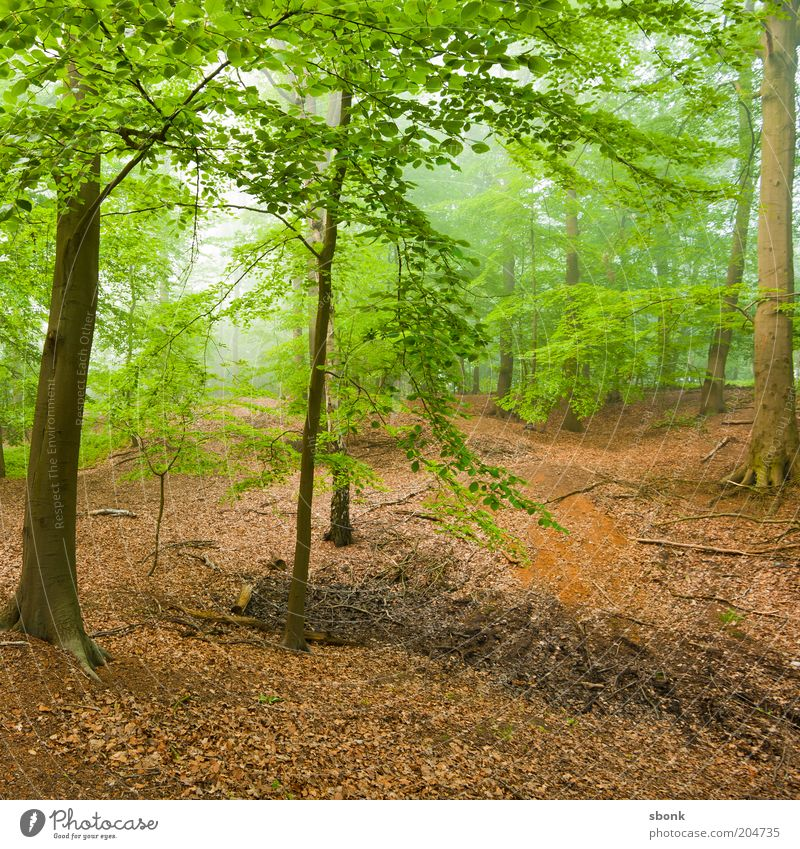 discovery Environment Nature Landscape Plant Climate Weather Fog Tree Foliage plant Forest Virgin forest Idyll Deciduous forest Deciduous tree Calm Colour photo