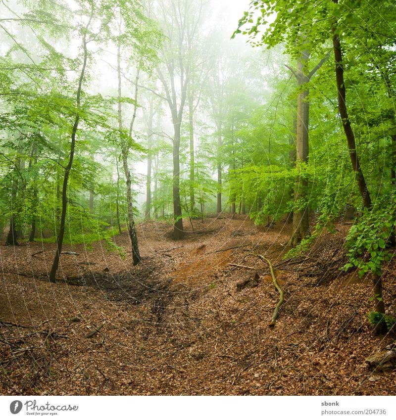 concentration Environment Nature Landscape Plant Summer Climate Fog Tree Forest Virgin forest Calm Deciduous forest Deciduous tree Colour photo Exterior shot