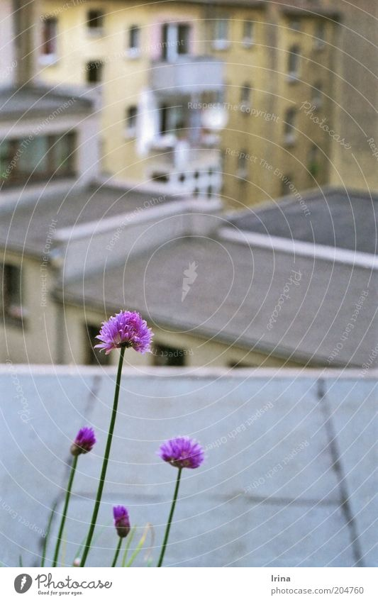 City Environment Wall (building) Wall (barrier) Blossom Gray Brown Facade Gloomy Living or residing Growth Roof Violet Herbs and spices Balcony Stalk
