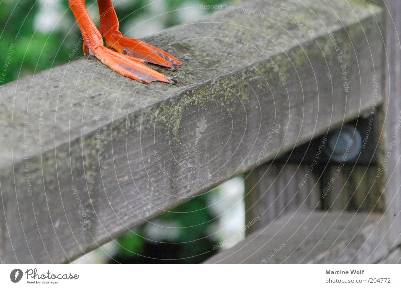 Show me your feet. Legs Bird Claw Duck Drake Stand Unwavering Webbing Animal foot Close-up Detail Colour photo Deserted