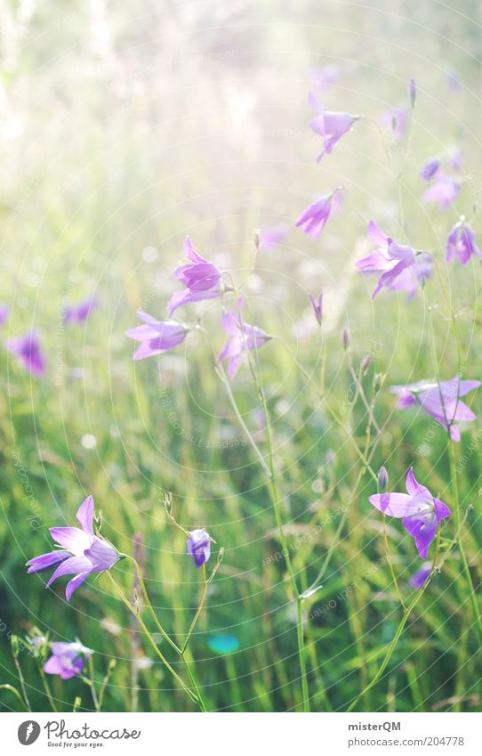 Summer meadow. Environment Nature Plant Esthetic Fragrance Inspiration Sustainability Time Violet Summerflower Blossom Green Calm Romance Colour photo