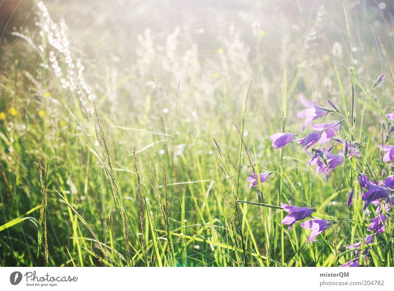 Moment of Peace. Environment Nature Plant Grass Wild plant Meadow Esthetic Fragrance Loneliness Calm Flower meadow Meadow flower Violet June Pasture