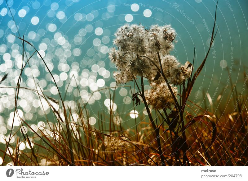 light chain Freedom Summer Nature Plant Beautiful weather Wild plant Mountain Water Blue Brown Green Emotions Moody Loneliness Colour photo Subdued colour