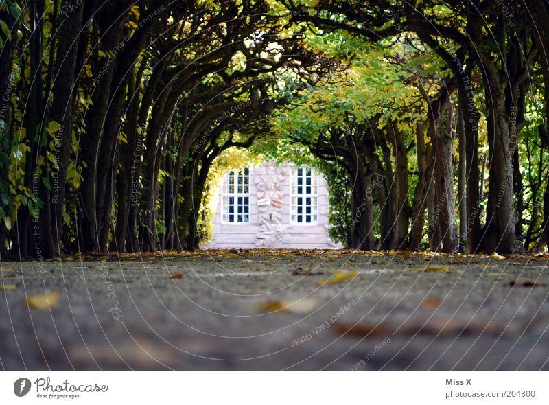 pleasure garden Garden Tree Castle Park Street Lanes & trails Fairytale castle Avenue Colour photo Exterior shot Deserted Copy Space bottom Copy Space middle