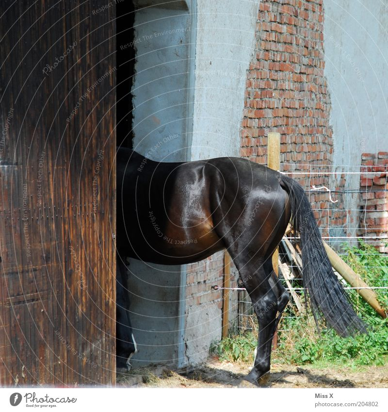 Animal Door Horse Hind quarters Farm Hide Tails Timidity Barn Farm animal Flee Stable Barn door
