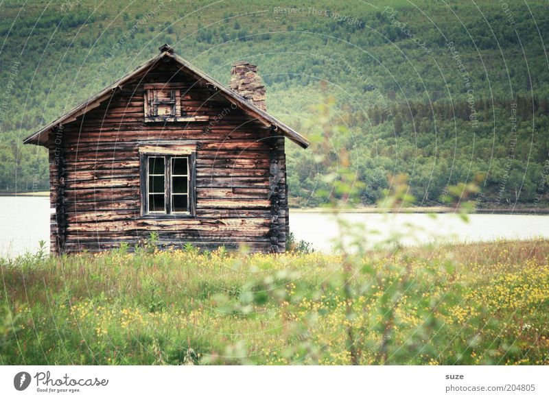 Nature Green Vacation & Travel Summer Flower Loneliness Landscape House (Residential Structure) Forest Environment Meadow Lake Trip Beautiful weather Lakeside