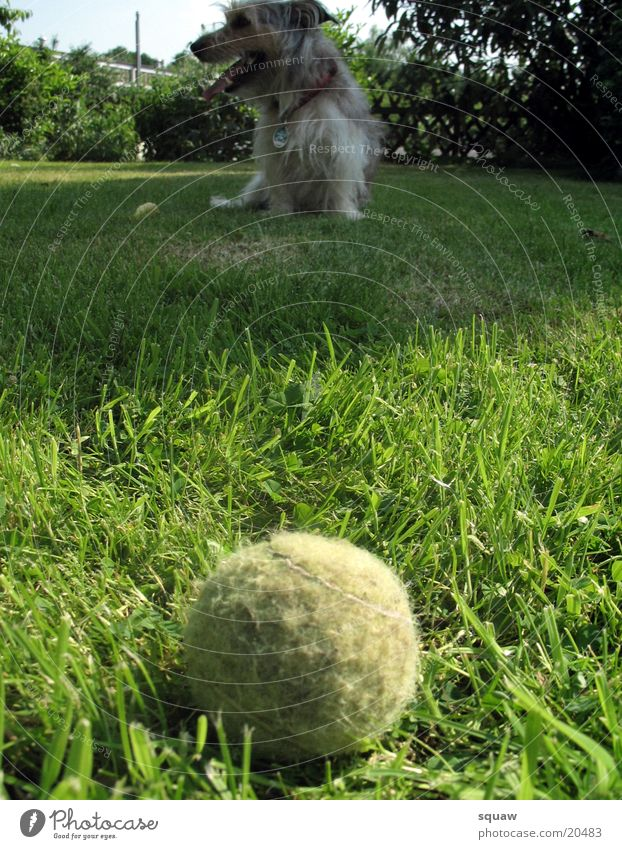 Ball with dog Dog Animal Garden Nature