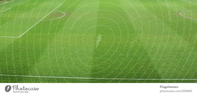 Green Sports Soccer Lawn Leisure and hobbies Clean Grass surface Stadium Football pitch Ball sports Sporting Complex Football stadium Penalty area Marker line