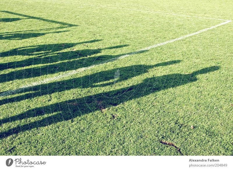 Human being Green Life Sports Grass Group Friendship Signs and labeling Soccer Sports team Team Grass surface Playing field Attachment Row Teamwork