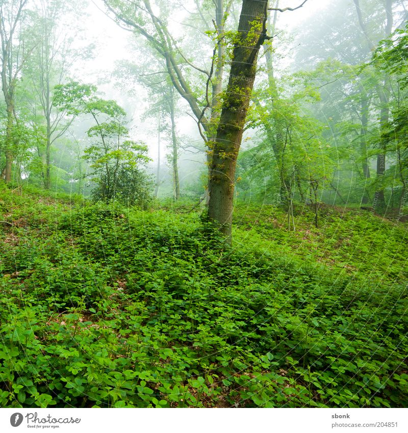 rest Environment Nature Plant Climate Fog Tree Foliage plant Forest Colour photo Exterior shot Morning Calm Untouched Wilderness Deciduous forest Ivy Make green