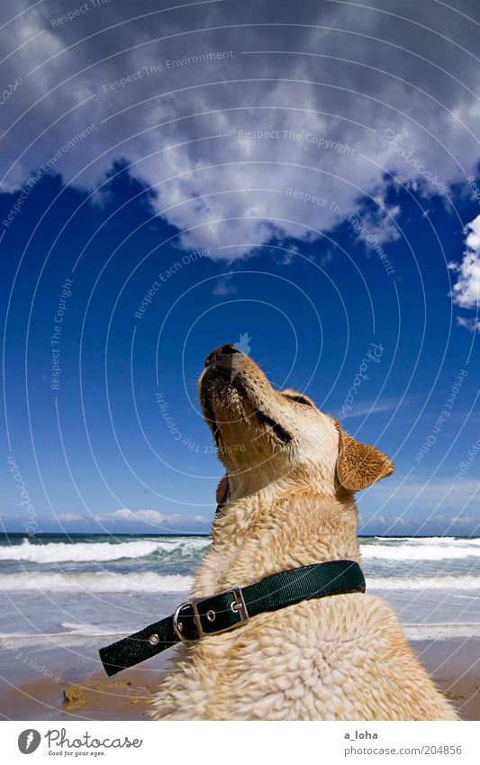 Nature Ocean Summer Beach Clouds Animal Far-off places Heaven Landscape Contentment Waves Coast Wait Wet Sit Dog