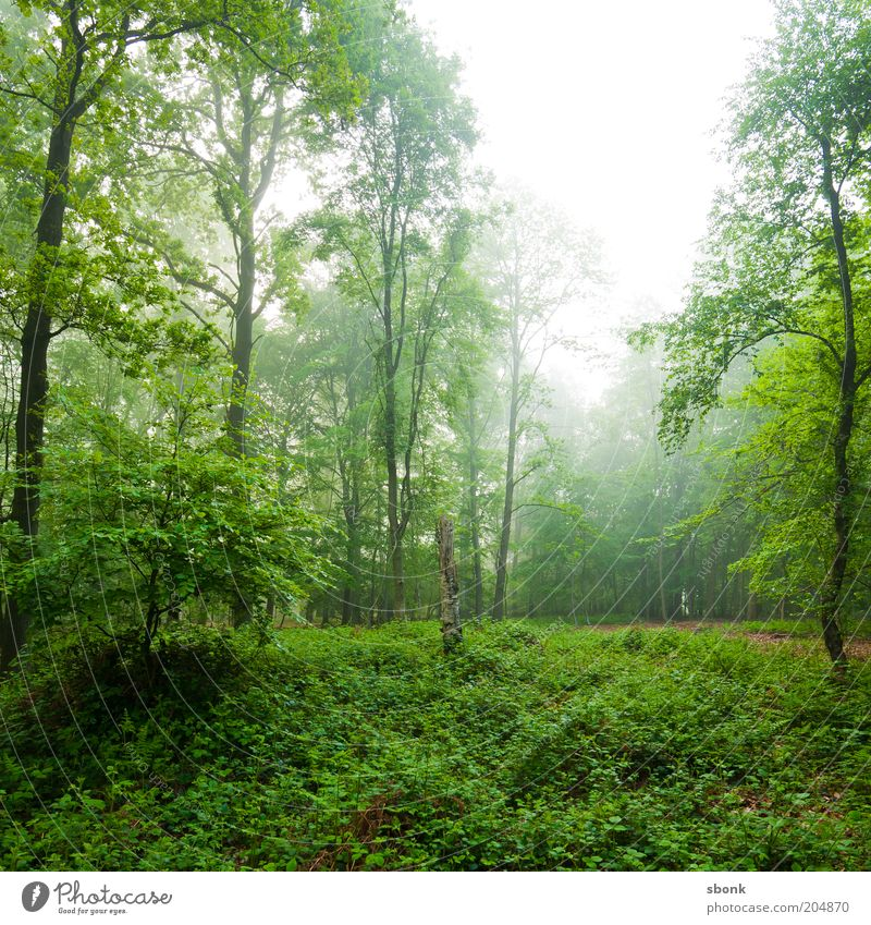 relaxation Environment Nature Landscape Plant Fog Tree Bushes Foliage plant Wild plant Forest Virgin forest Green Calm Deciduous forest Colour photo