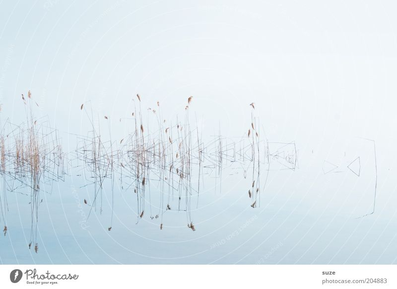 Nature Plant Calm Cold Grass Lake Landscape Environment Clean Clarity Natural Common Reed Purity Abstract Water reflection
