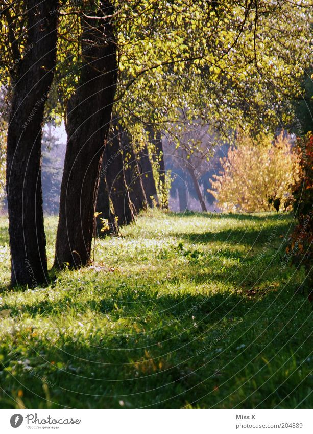 little idyll Relaxation Calm Nature Summer Autumn Tree Grass Garden Park Meadow Lanes & trails Apple tree Agriculture Fruittree meadow Avenue Colour photo