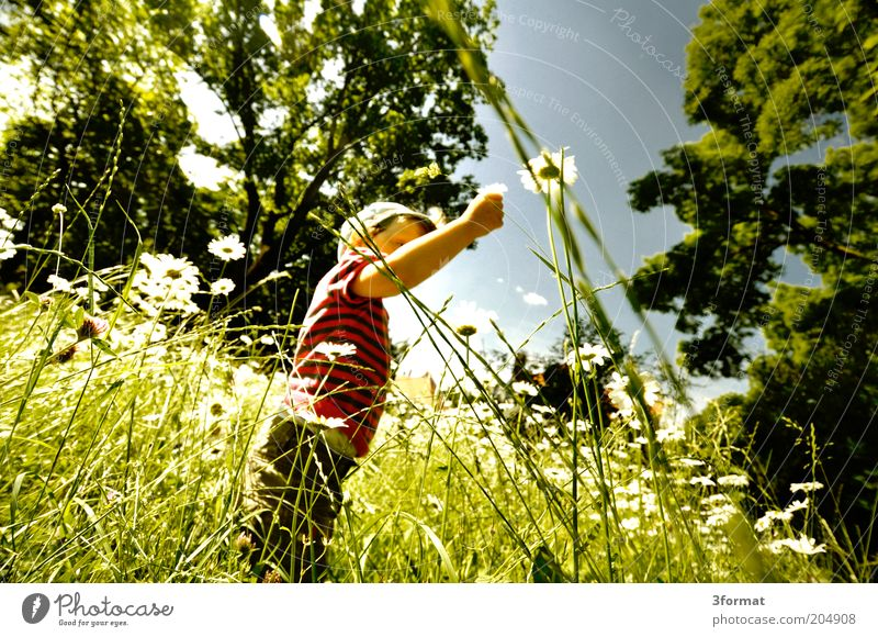 garden Trip Freedom Summer Summer vacation Garden Human being Toddler 1 1 - 3 years Nature Plant Climate Beautiful weather Flower Grass Park Meadow Touch