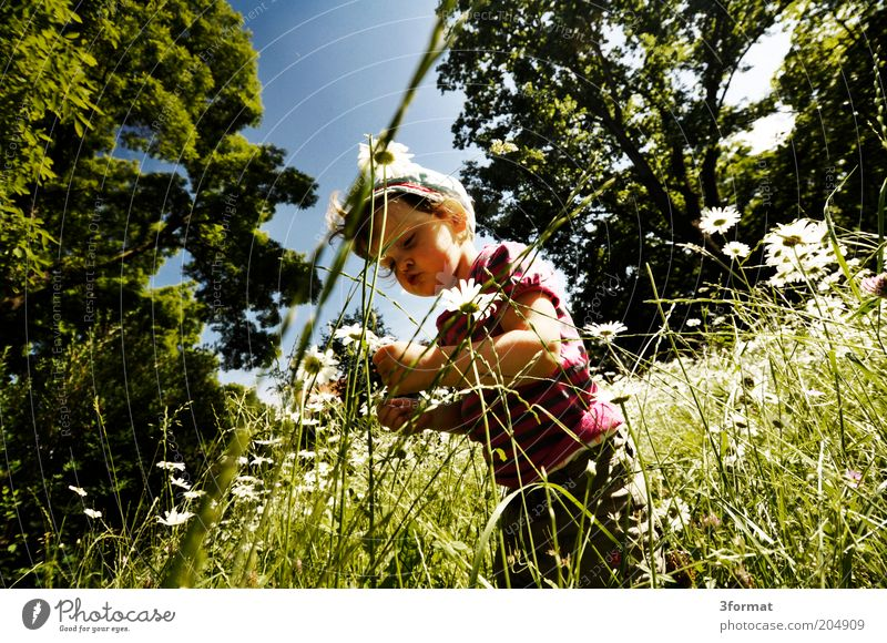 garden Child Toddler 1 Human being 1 - 3 years Nature Summer Beautiful weather Flower Grass Garden Park Observe Touch Blossoming Think Fragrance Discover Happy