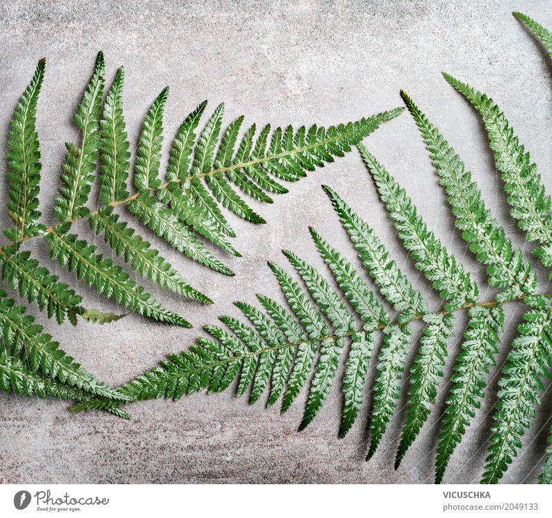 fern leaves on grey concrete background Lifestyle Style Design Nature Plant Fern Leaf Oasis Decoration Ornament Fern leaf Concrete City life Hipster Green Gray