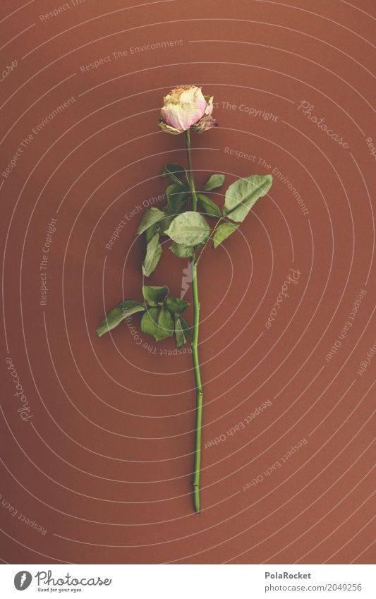 #A# Peace Art Work of art Esthetic Rose Rose leaves Rose garden Dried flower Grief Funeral procession Remember Death Peaceful Shriveled Flower