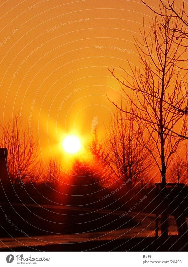 Sunset Tree Lighting Evening Orange
