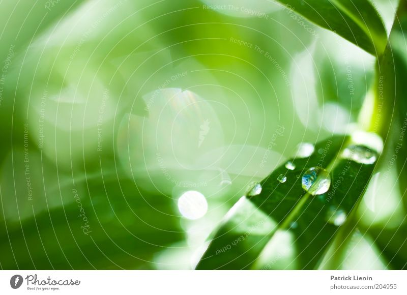 drops Environment Nature Illuminate Green Plant Drop Smooth Beautiful Brilliant Deep Spring Colour photo Macro (Extreme close-up) Deserted Copy Space left Day