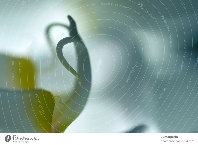 body tension Plant Orchid Exotic Esthetic Elegant Beautiful Soft Yellow White Uniqueness Nature Structures and shapes Abstract Blossom Colour photo
