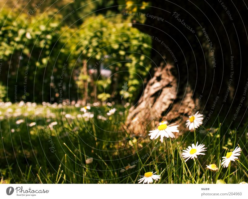 moment of happiness Happy Harmonious Well-being Contentment Relaxation Calm Fragrance Summer Garden Environment Nature Landscape Plant Spring Beautiful weather