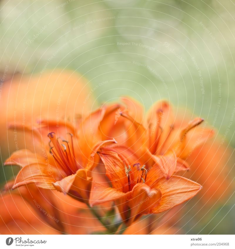 good morning Environment Nature Plant Flower Blossom Exotic Green Delicate Colour photo Exterior shot Close-up Orange Detail Deserted Pistil Blossom leave Calyx