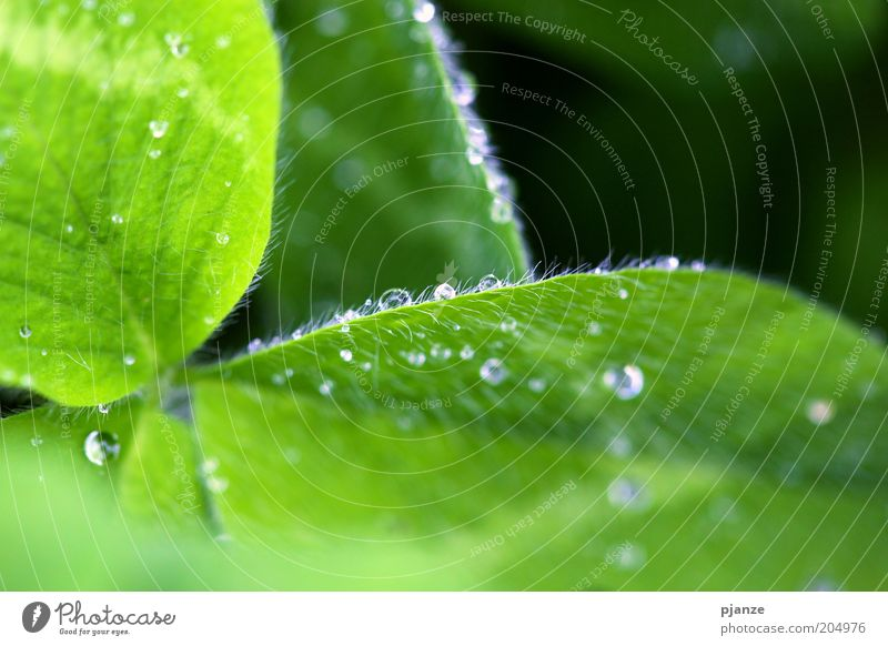 Nature Flower Green Plant Leaf Glittering Drops of water Wet Fresh Esthetic Drop Damp Dew Foliage plant Purity Macro (Extreme close-up)