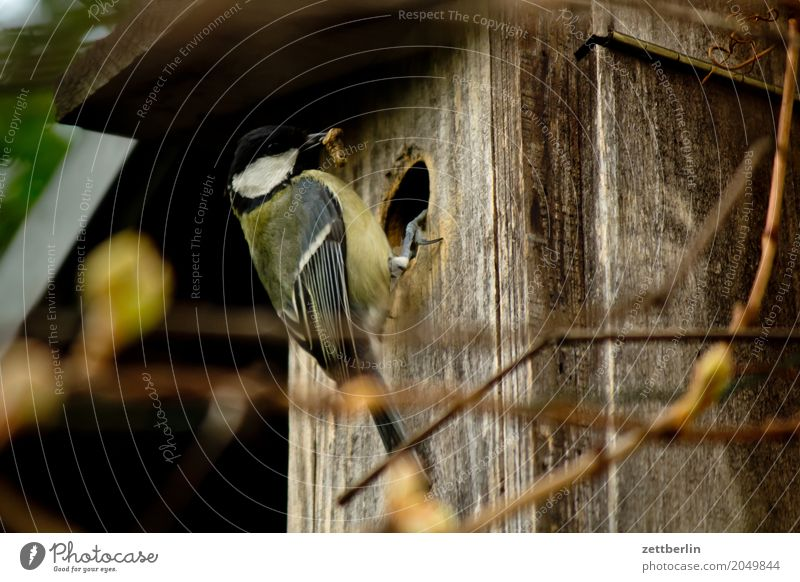 Tit with twig Tit mouse paridae Departure Landing Parental care Bird's eggs Parents Spring Feeding Garden House (Residential Structure) Nesting box