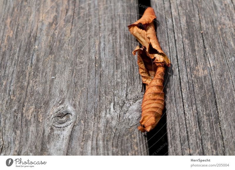 Leaf Autumn Wood Gray Brown Dry Wooden board Furrow Remainder Autumn leaves Copy Space left Limp
