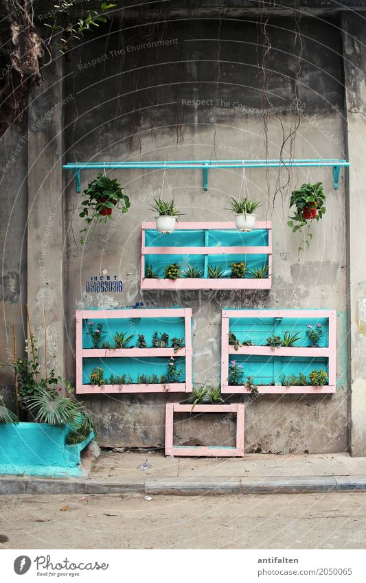 Vacation & Travel Plant Town Leaf House (Residential Structure) Wall (building) Blossom Wall (barrier) Garden Tourism Facade Flat (apartment) Living or residing Leisure and hobbies Decoration Happiness