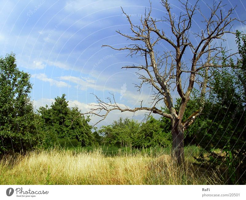The transience of life Tree Headstrong Grass Clouds Summer Bushes Sun
