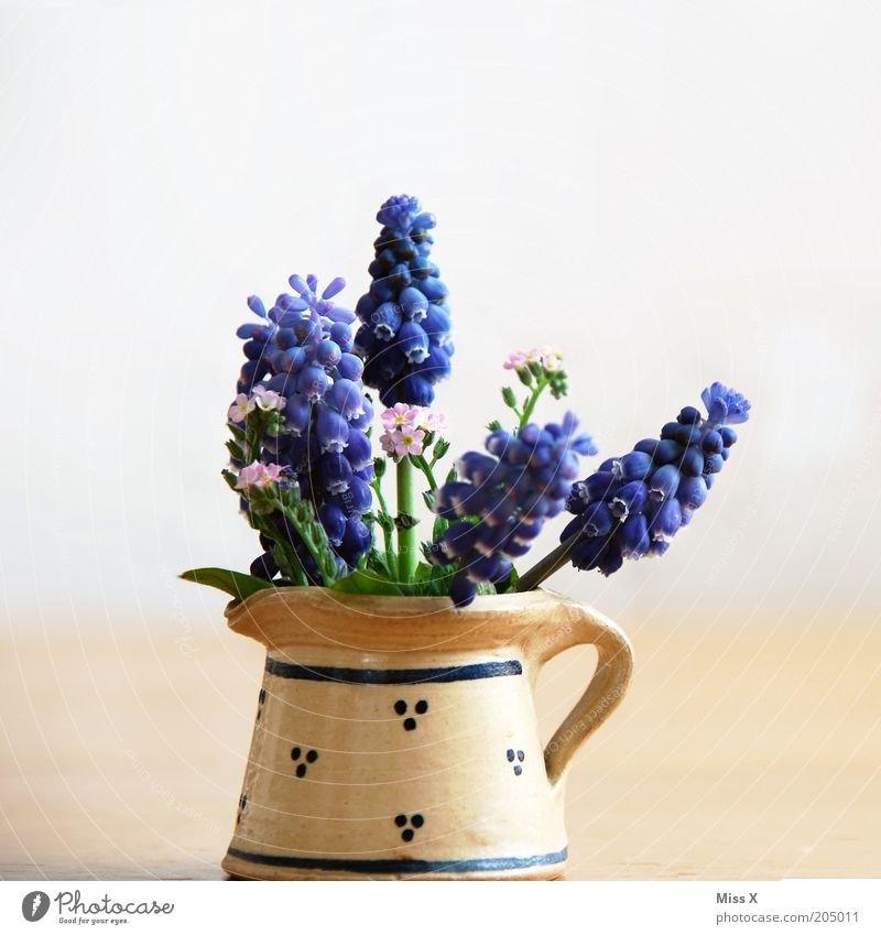 Flower Blossom Spring Small Decoration Blossoming Fragrance Bouquet Nostalgia Vase Jug Spring fever Things Water jug Forget-me-not Hyacinthus