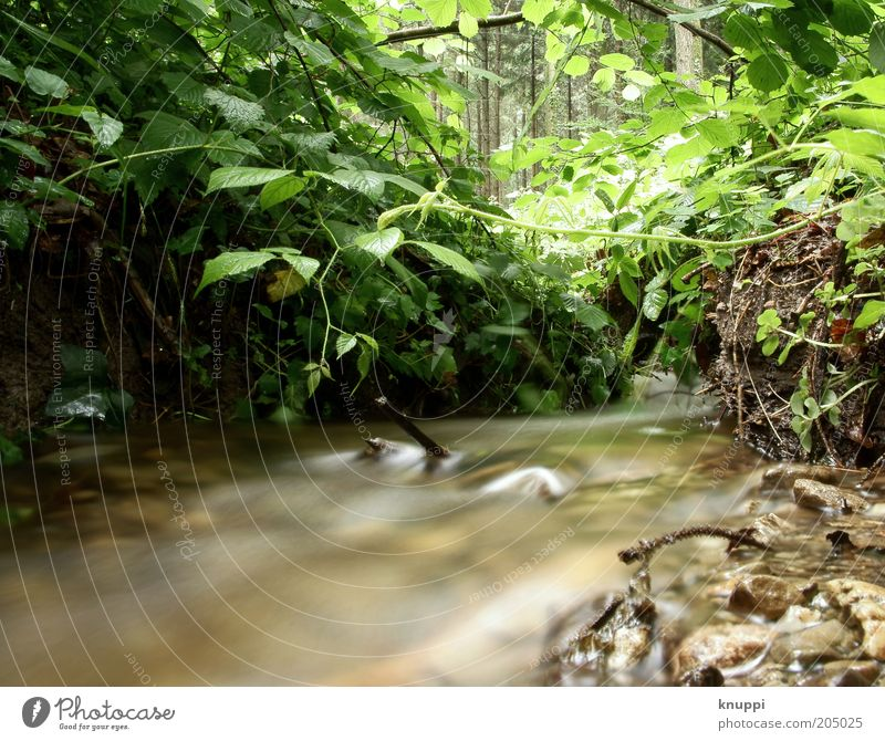 Nature Water Green Plant Forest Brown Environment Bushes Wild Brook River bank Flow Banks of a brook Body of water