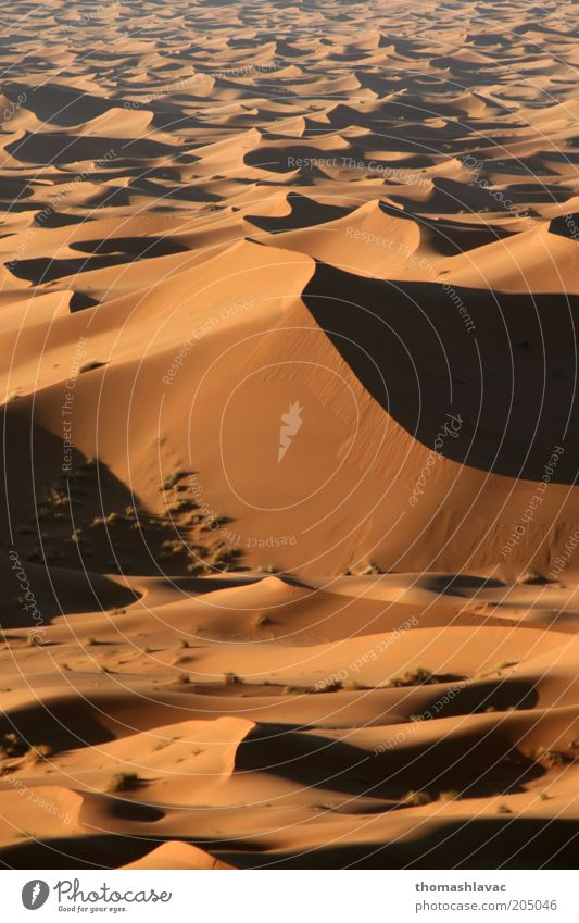 Sahara in Morocco Environment Nature Landscape Sand Beautiful weather Desert Vacation & Travel Dune Colour photo Exterior shot Deserted Morning Light Shadow