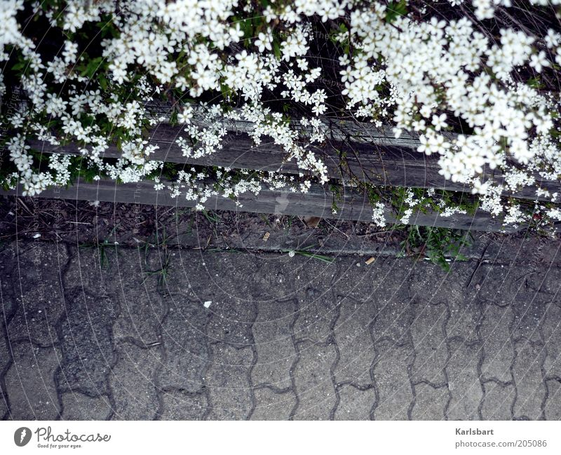 Nature White Plant Summer Flower Blossom Gray Lanes & trails Environment Stone Safety Bushes Border Sidewalk Traffic infrastructure Fence