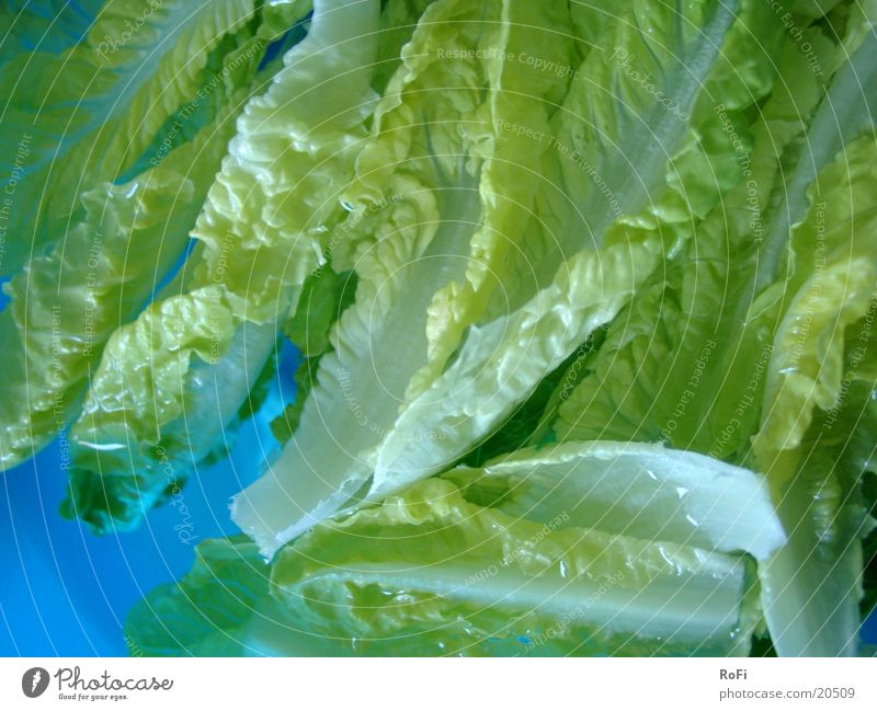 Water Green Blue Nutrition Healthy Lettuce Vegetable